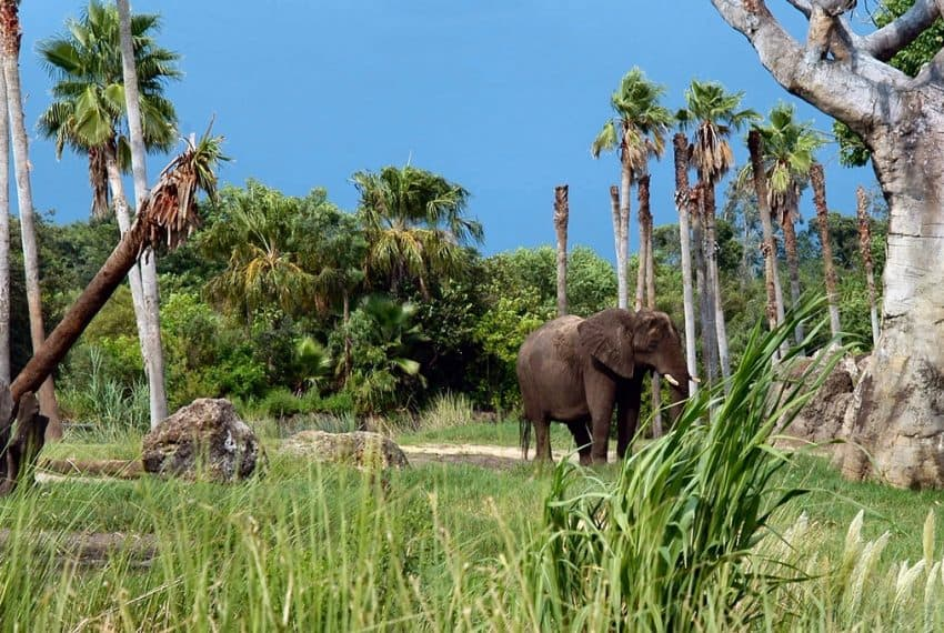 Safari_at_Seaworld_Park_Orlando_Florida_terrenosnaflorida-com_shutterstock_606257_1200x680