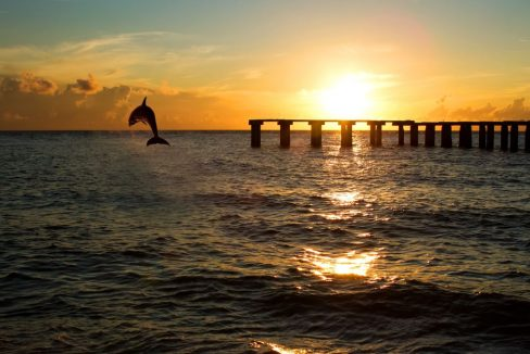 dolphin_jumping_out_of_the_sea_in_pier_florida_terrenosnaflorida-com_shutterstock_123896368_1200x680